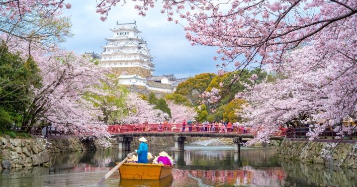 japonia-2021-sarbatoarea-ciresilor-in-floare_14_4404_1.jpg